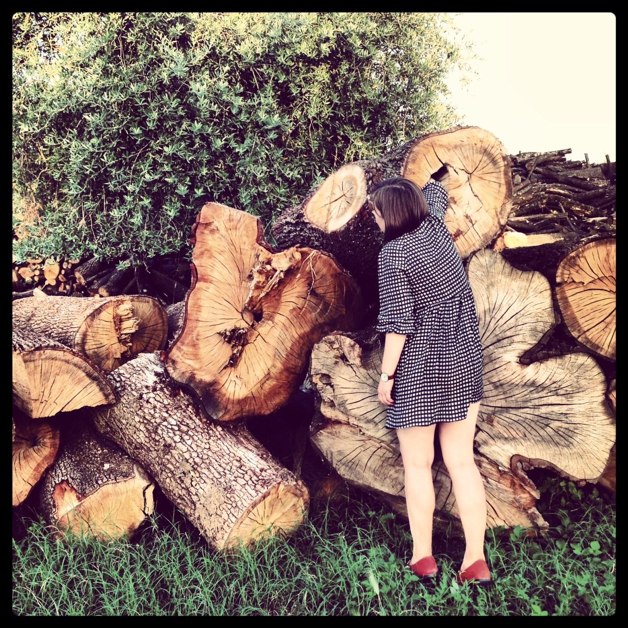 Rosanna photo tree
